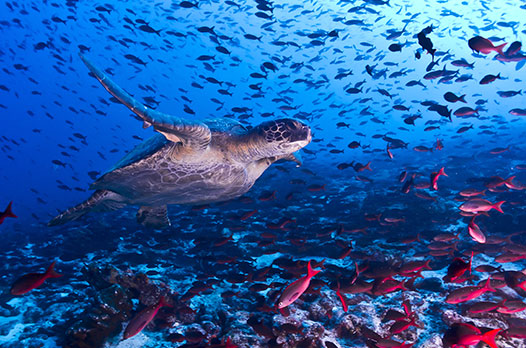 Travel In The Galapagos With John Shors
